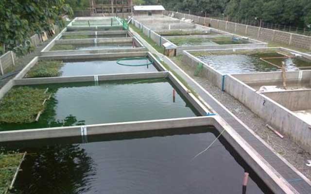 1. Pembuatan Kolam Ikan Lele