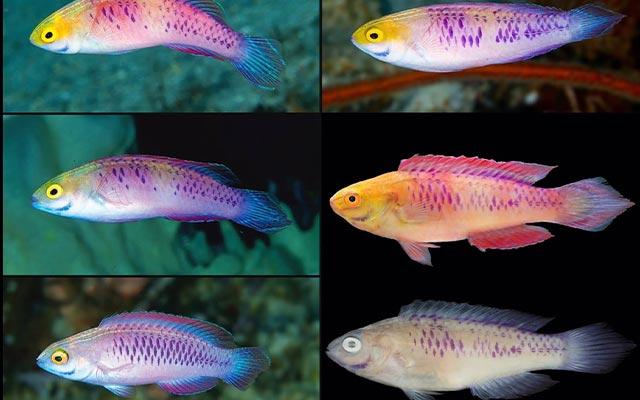 Pembentukan Spesies Baru