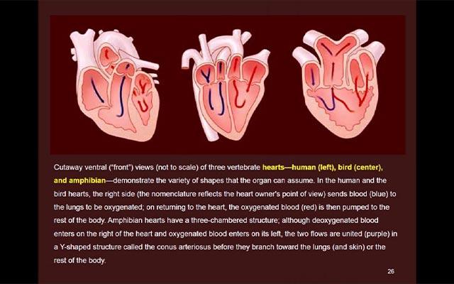 Anatomi Perbandingan