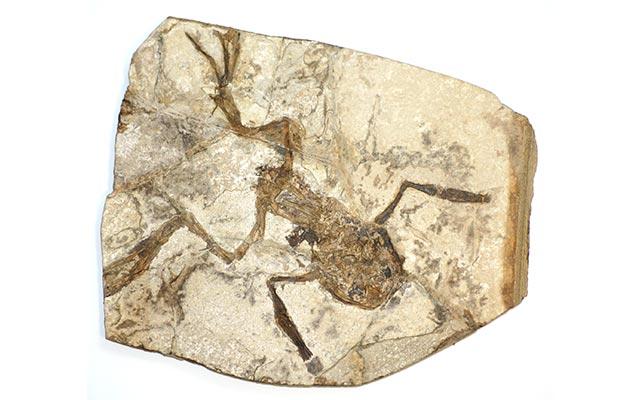 Bukti Paleontologi