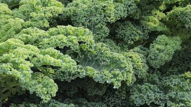 14. Kale