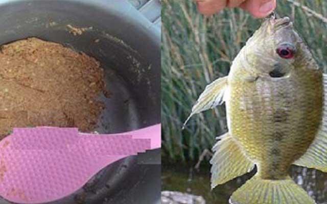 Rekomendasi Racikan Umpan Untuk Ikan Nila