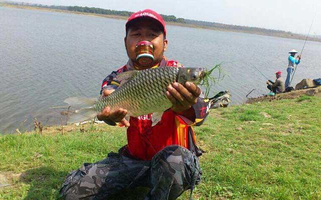 Umpan Ikan Tawes Cara Meracik Paling Jitu
