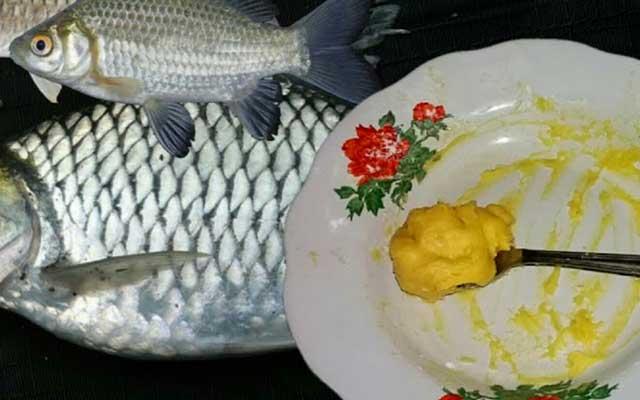 Umpan Ikan Tawes Cara Meraciknya