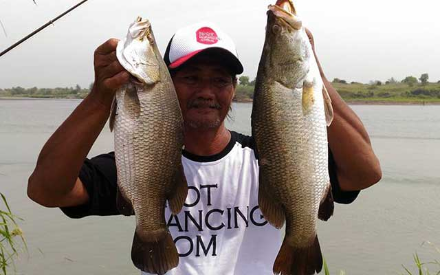 Rahasia Umpan Ikan Kakap Putih Atau Baramundi di Jamin Ampuh