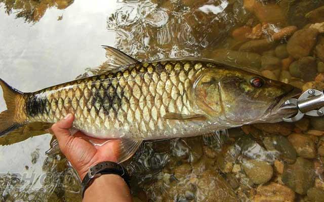 Spot Memancing Ikan Hampala