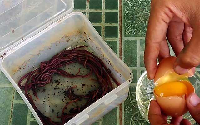 35 Racikan Umpan Ikan Lele Terbukti Paling Ampuh