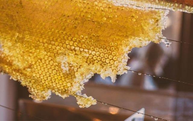 Bahaya Makan Sarang Lebah Berlebihan