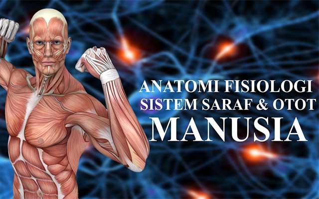 Macam Macam Otot Manusia Beserta Ciri ciri dan Fungsinya