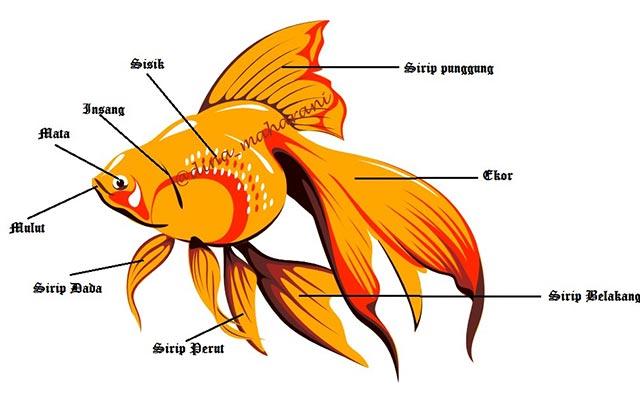Sistem Gerak Ikan