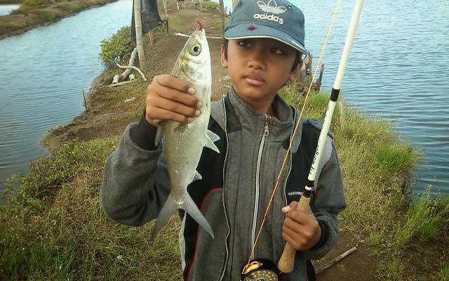 Umpan Ikan Tambak Paling Jitu di Siang Malam Pagi Hari