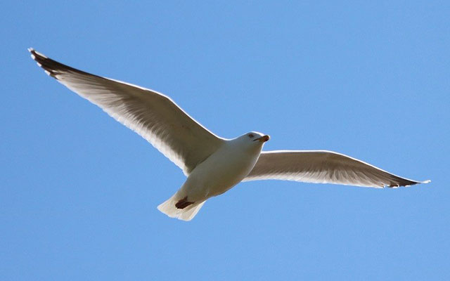 Cara Burung Terbang