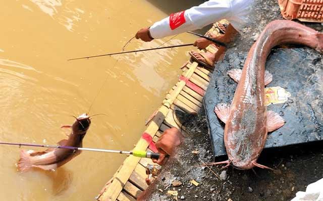 Umpan Jitu Ikan Lele di Air Keruh
